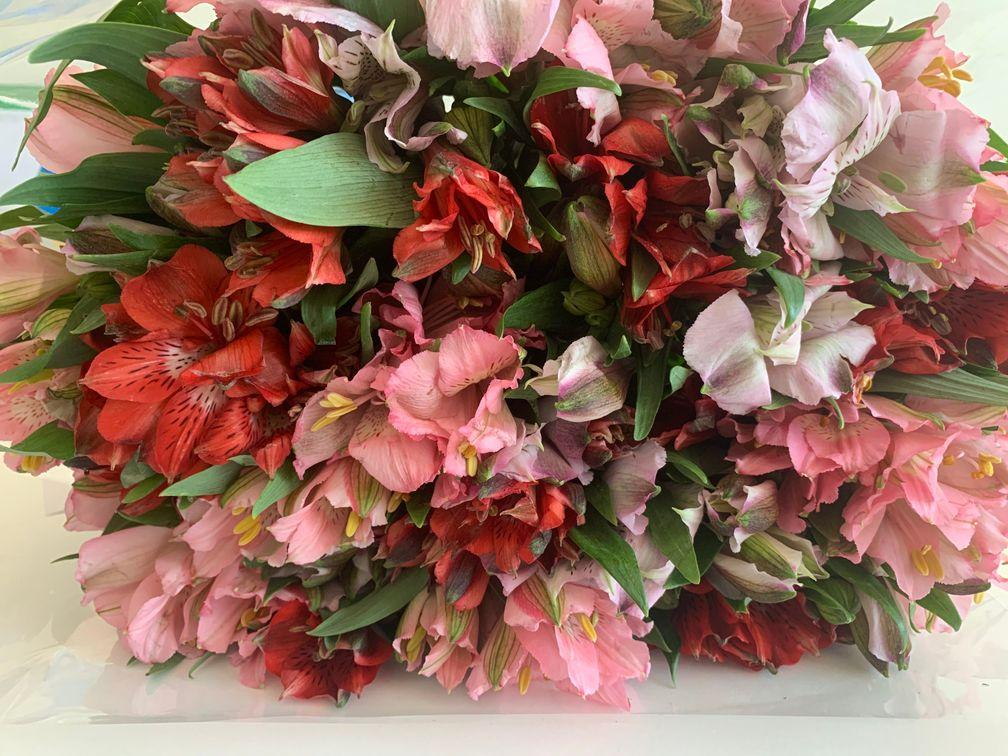 A bouquet of Mixed Alstroemeria Flowers