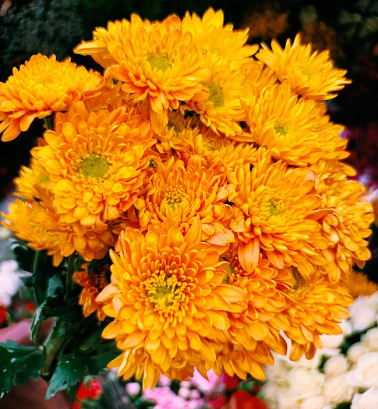 A Bouquet Of Chrysanthemum Orange