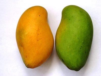 Ngowe Mangoes