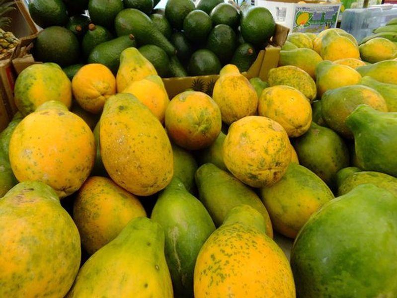 Papaya sp