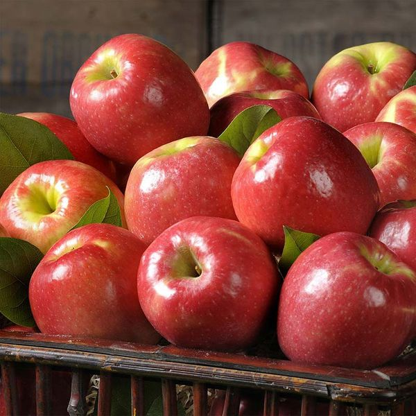 Apples Pink Lady - Cripps Pink (Large Size)